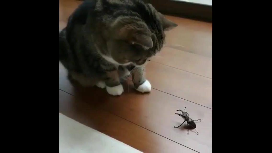 Gatinho tranando com carinho um inseto