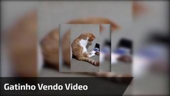 Gatinho Vendo Vídeo No Celular E Se Esfregando No Aparelho, Que Fofura!