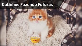 Gatinhos Amarelinhos Fazendo Fofuras, Mais Um Vídeo De Gatos Adoráveis!