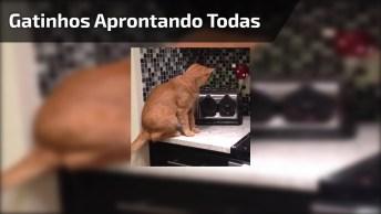 Gatinhos Aprontando Todas, Como Não Amar Este Animal, Eles São Demais!