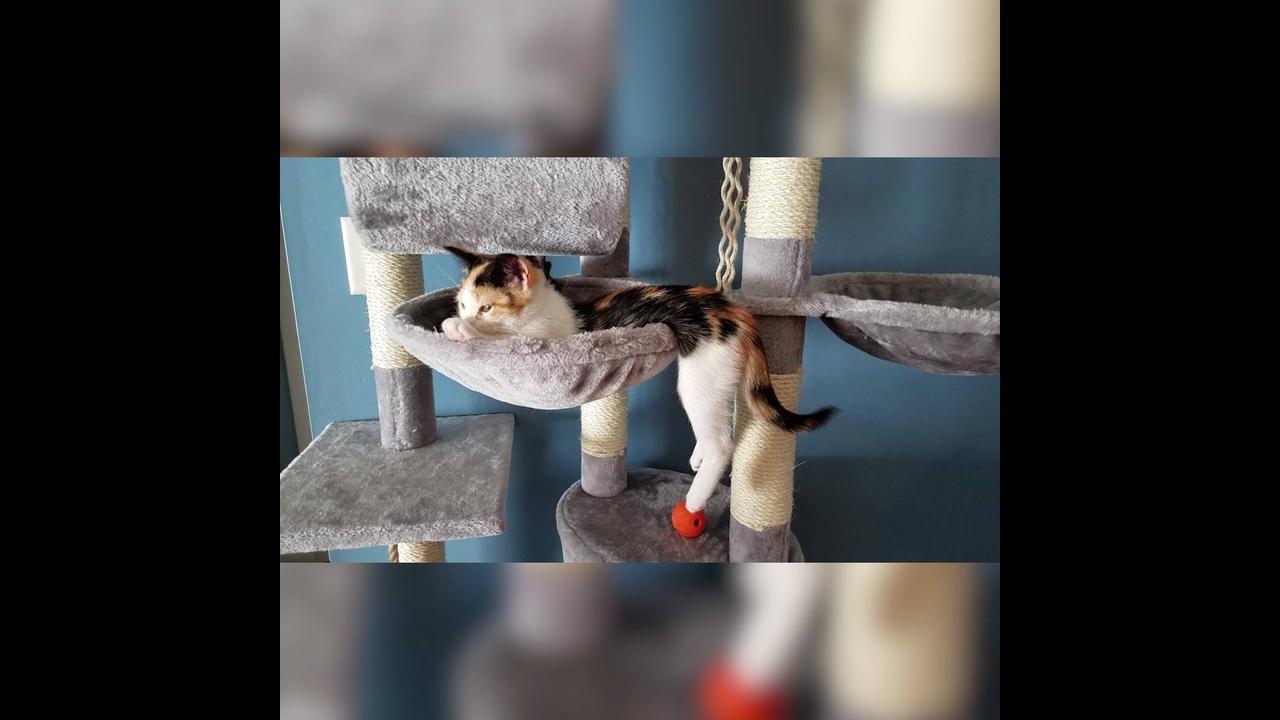 Gatinhos aprontando todas em casa