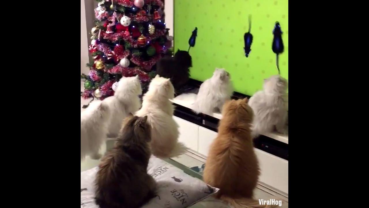 Gatinhos assistindo televisão juntinhos