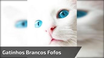 Gatinhos Brancos Super Fofos, Tem Como Não Se Apaixonar Por Essas Criaturas?