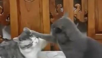 Gatinhos Brigando De Maneira Mais Fofa Impossível, Confira!