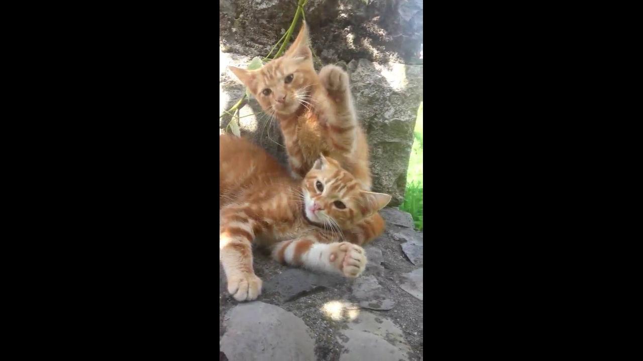 Gatinhos brincando com a mão de seu dono