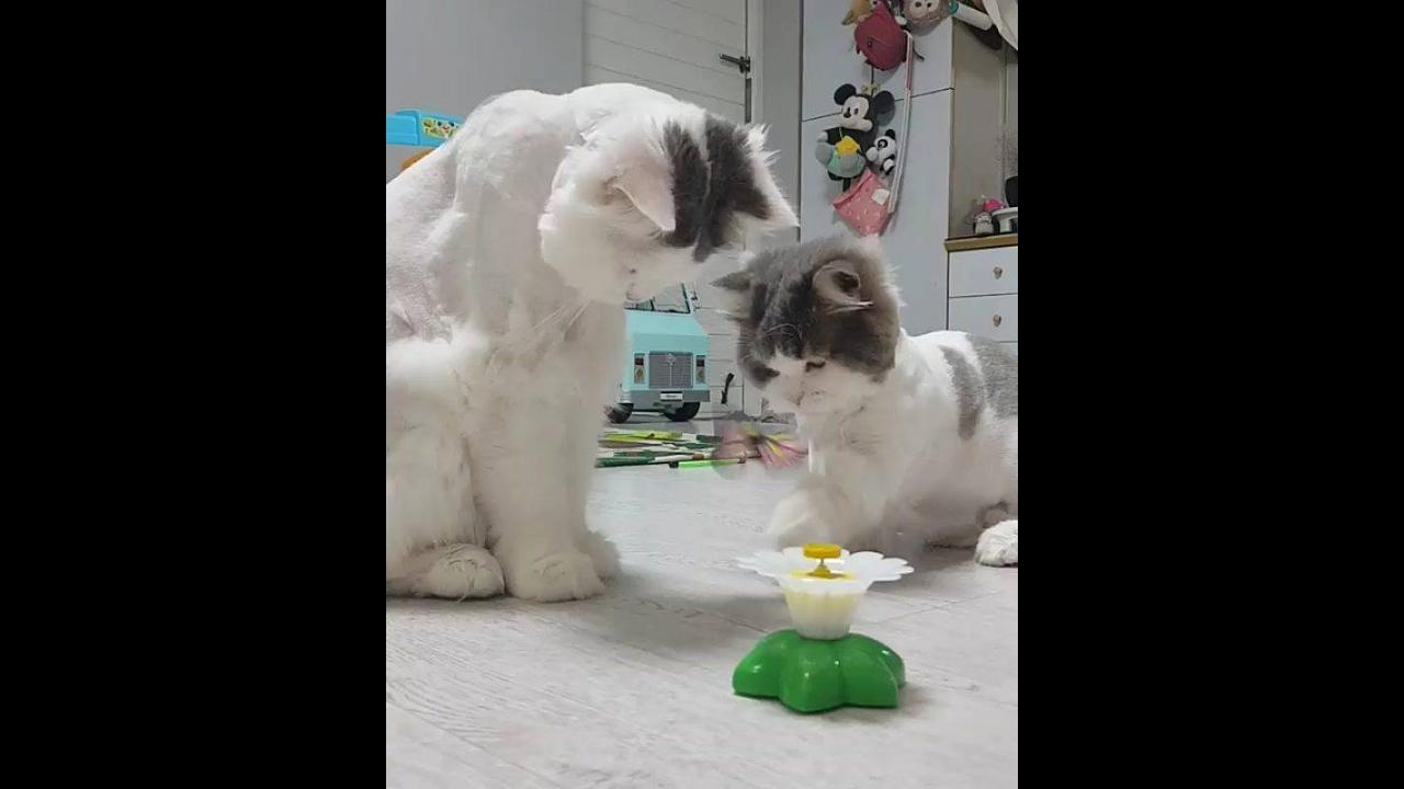 Gatinhos brincando com borboleta de brinquedo