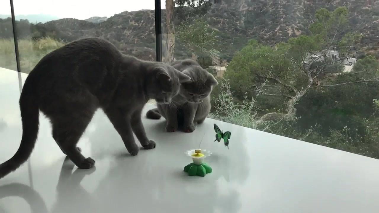 Gatinhos brincando com brinquedinho novo de borboleta