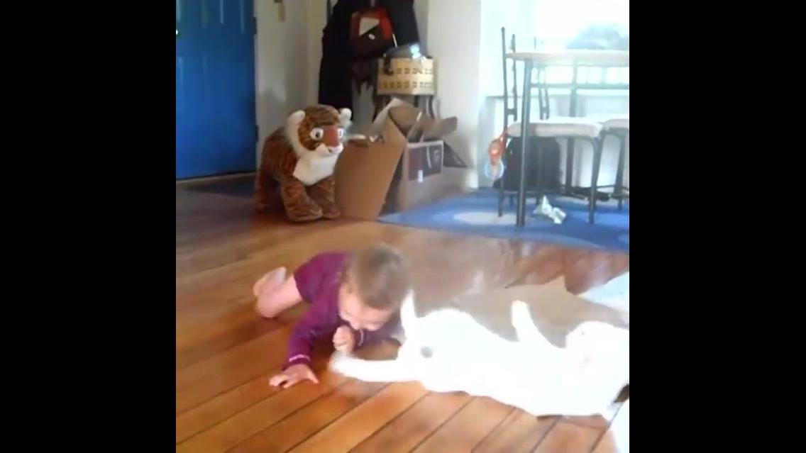 Gatinhos brincando de lutinha com crianças