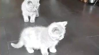Gatinhos Brincando Em Um Pet Droid, Seu Gato Vai Amar Esse Brinquedo!