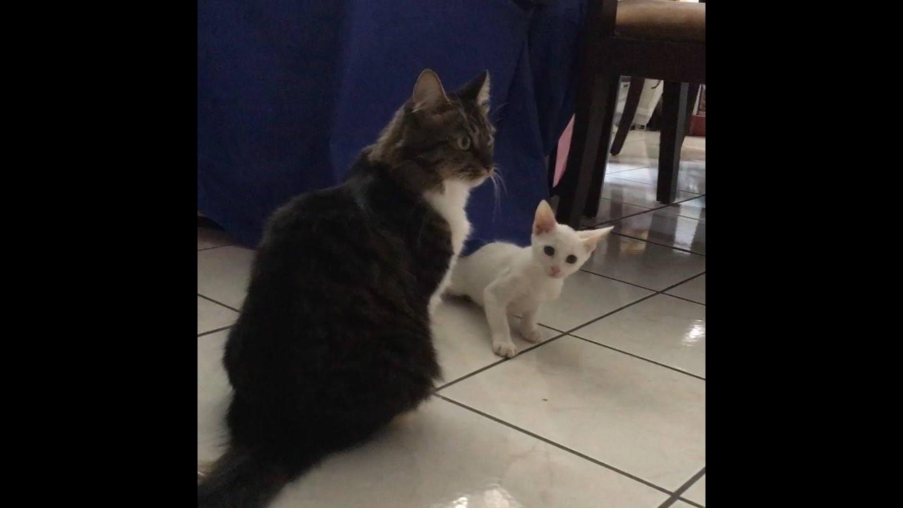 Gatinhos brincando entre si