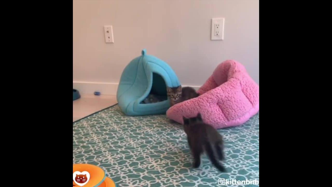 Gatinhos brincando
