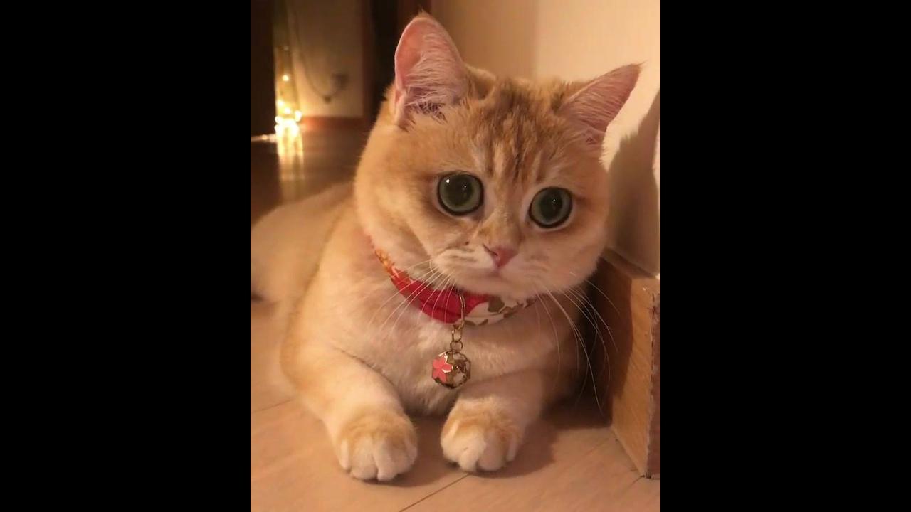 Gatinhos com olhinhos mais fofinhos que você já viu