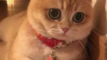 Gatinhos Com Olhinhos Mais Fofinhos Que Você Já Viu, Confira!