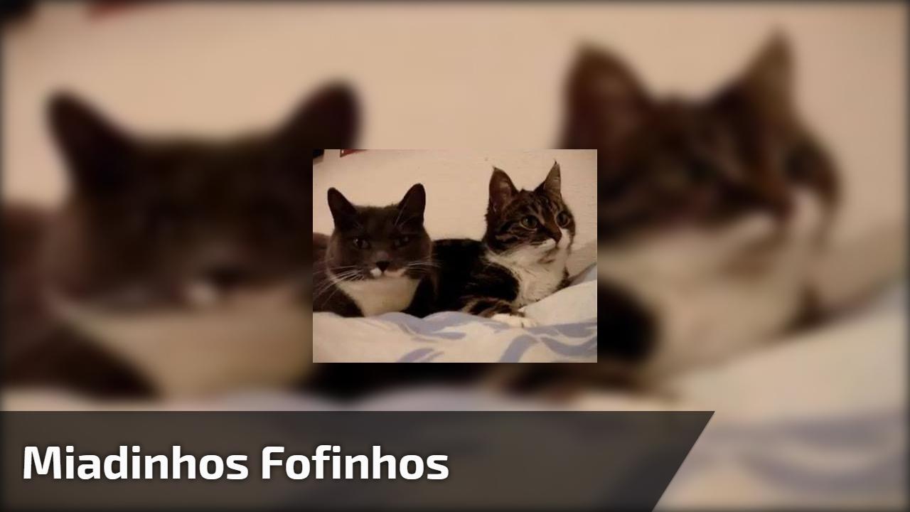 Gatinhos com os miadinhos mais lindinhos que você vai ver hoje!!!