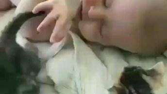 Gatinhos Conhecendo Um Bebê, O Vídeo Mais Fofo Que Você Vai Ver Hoje!
