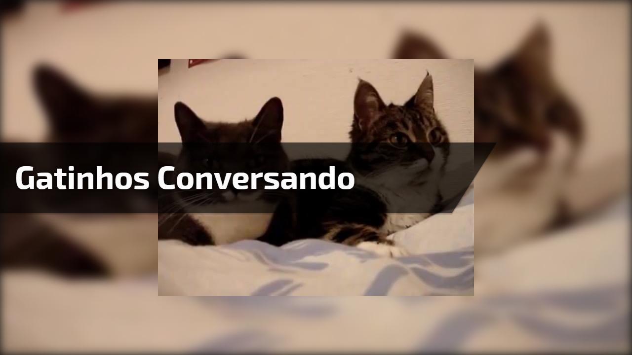 Gatinhos conversando