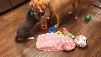 Gatinhos E Bebês, Uma Combinação Que Gera Muitas Risadas, Confira!