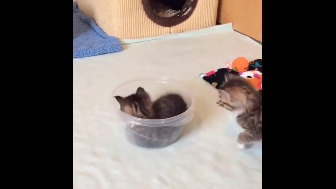 Gatinhos fofinhos brincando com pote