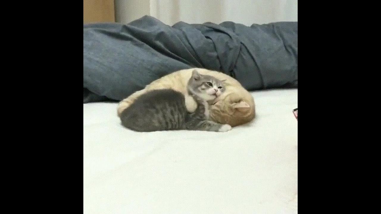 Gatinhos fofinhos, como não amar estes animais tão lindinhos