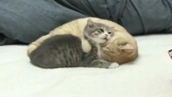Gatinhos Fofinhos, Como Não Amar Estes Animais Tão Lindinhos!