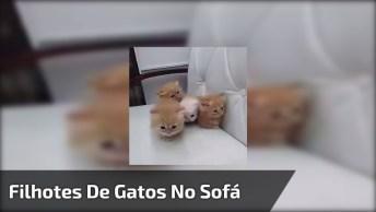 Gatinhos Fofinhos No Sofá, Olha Só Que Lindezas De Filhotes!