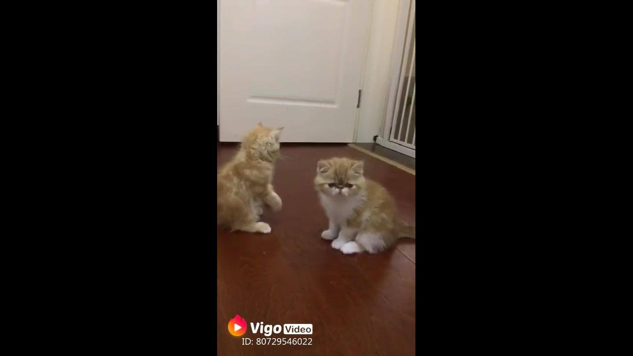 Gatinhos fofos brincando de lutinha
