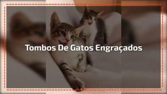 Gatinhos Levando Os Tombos Mais Engraçados Da Internet, Confira!
