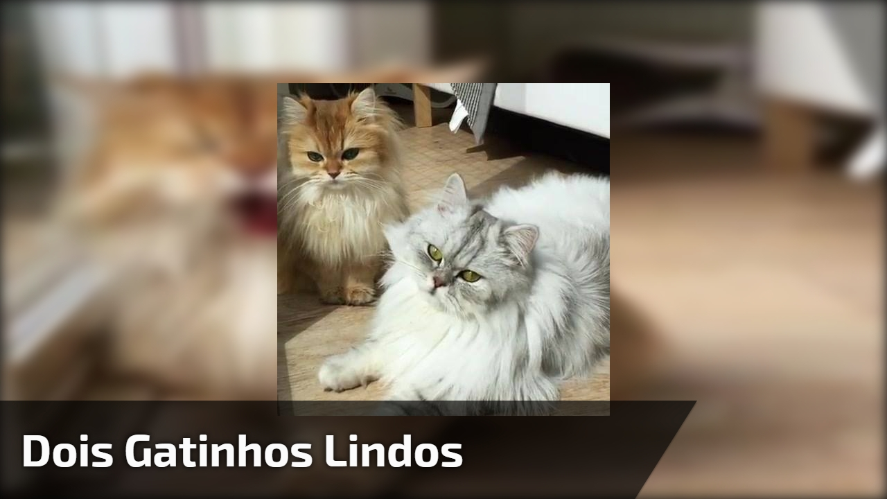 Dois gatinhos lindos