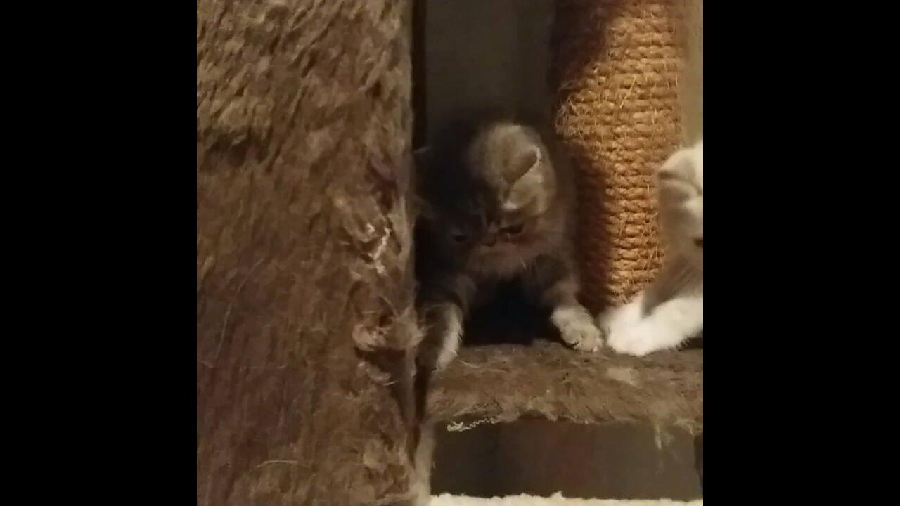 Gatinhos mais fofos que você vai ver hoje, veja a casinha deles!!!
