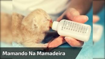 Gatinhos Mamando Na Mamadeira, Que Coisa Mais Fofinha, Confira E Compartilhe!