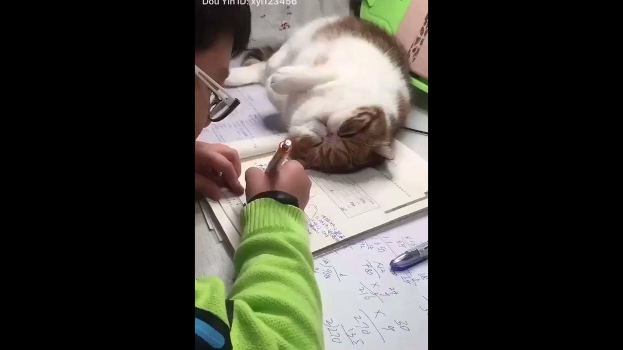 Gatinhos pedindo atenção de seus donos