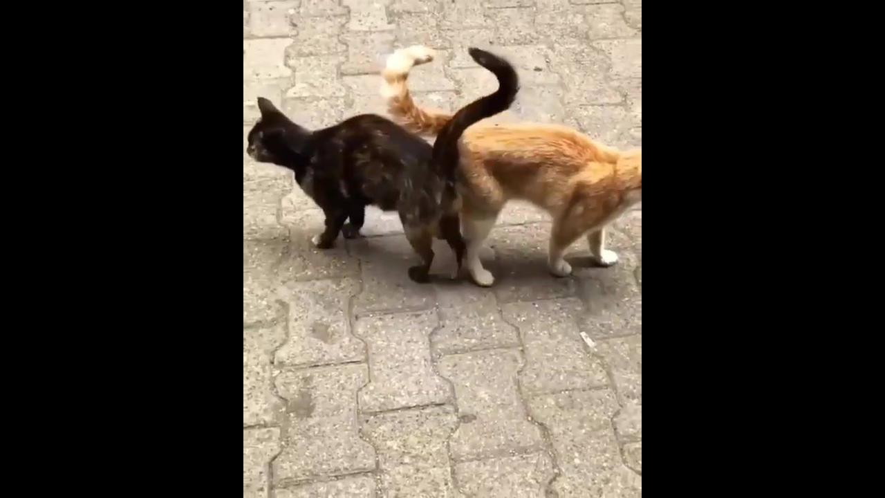 Gatinhos que são verdadeiros grudinhos