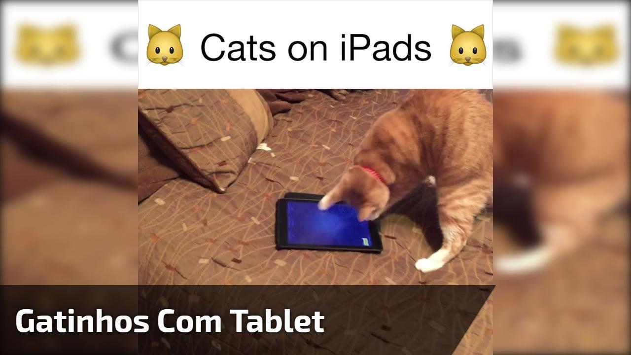 Gatinhos com tablet
