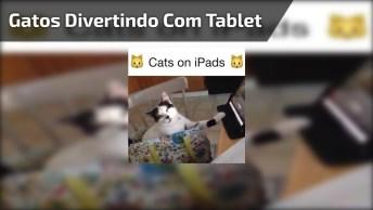 Gatinhos Se Divertindo Com Tablet Veja Como Eles Gostam De Tecnologia, Hahaha!