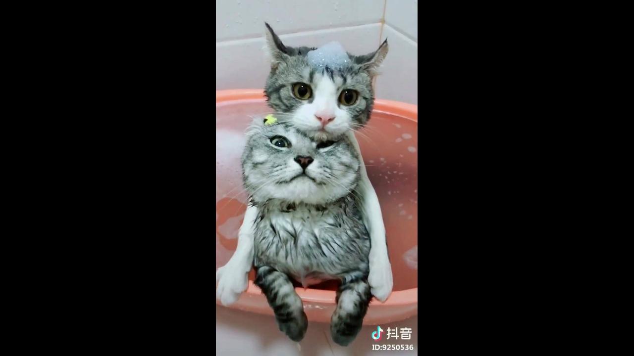 Gatinhos se refrescando na bacia