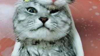 Gatinhos Se Refrescando Na Bacia, Quem Disse Que Gato Não Gosta De Água!