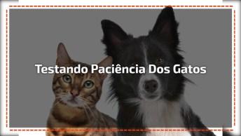Gatinhos Testando Paciência Dos Cães, Olha Só Esta Galerinha!