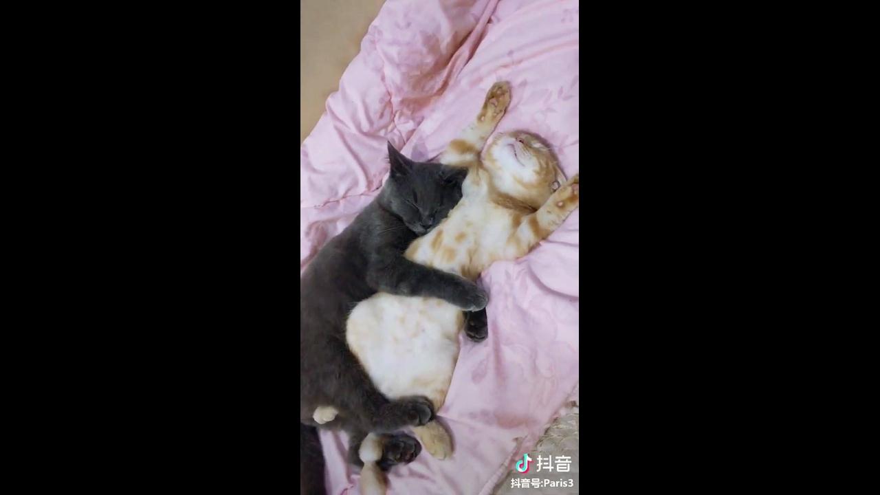 Gatinhos tirando uma soneca juntinhos
