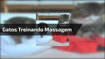 Gatinhos Treinando Fazer Massagem, Olha Só Que Engraçadinhos Estes Dois!