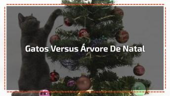 Gatinhos Versus Árvore De Natal, Olha Só O Que Eles Aprontam!