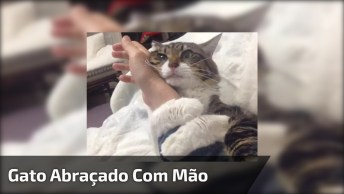 Gato Abraçado Com A Mão De Humano, Não Vai Embora Não, Hahaha!