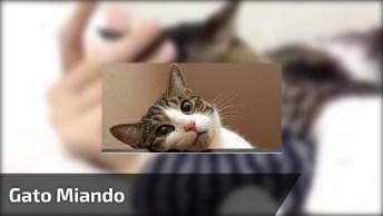 Gato Abraçado No Braço Da Humana, Você Não Vai Sair Daqui!
