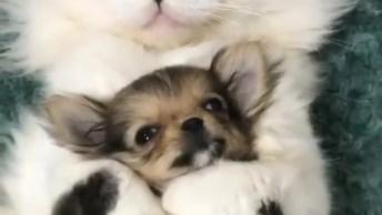 Gato Abrasado Com Seu Novo Amiguinho, Olha Só Que Imagem Mais Fofinha Gente!