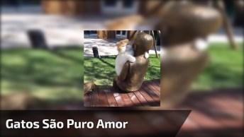 Gato Abrasando Escultura De Garotinho Na Praça, Olha Só Que Fofura!