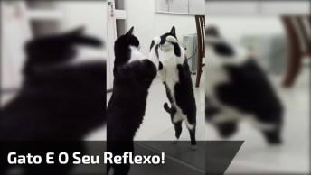 Gato Achando Que Seu Reflexo No Espelho É Outro Gatinho, Olha Só Que Fofo!