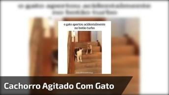 Gato Apertando Botão Turbo Do Cachorrinho, Confira A Cena!