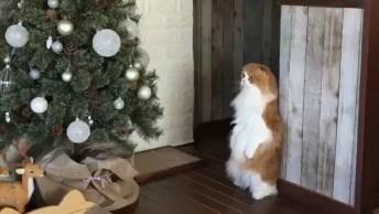 Gato Assustado Com A Árvore De Natal, Veja A Carinha Dele!
