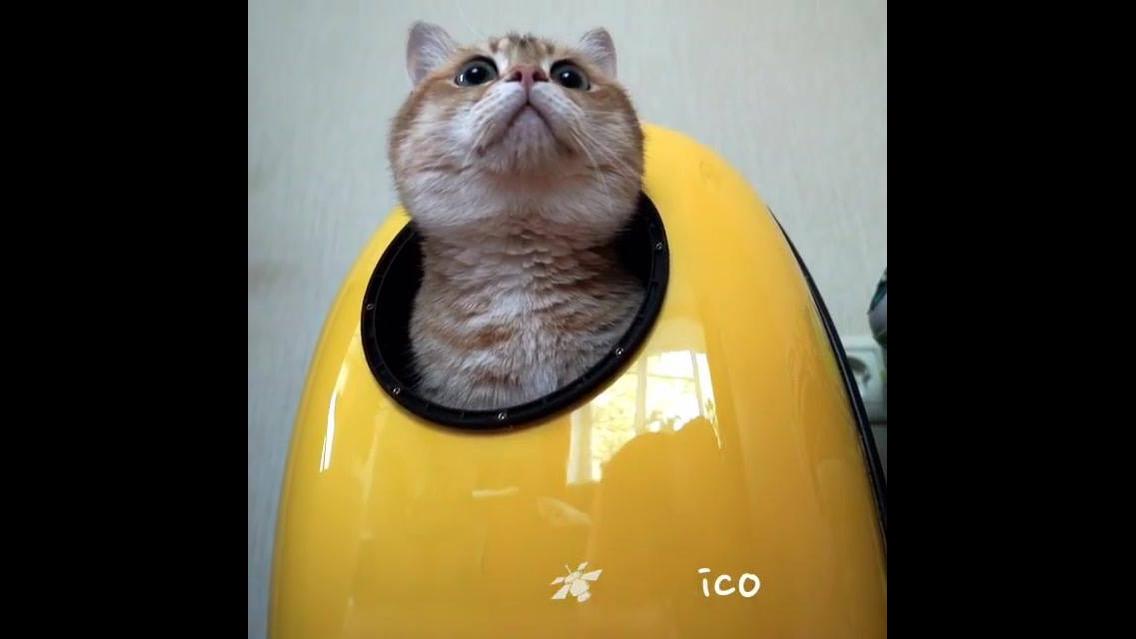 Gato Astronauta, por essa você não esperava