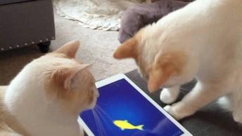 Gato Atrapalhando A Filmagem Da Tutora E Muito Mais, Confira!