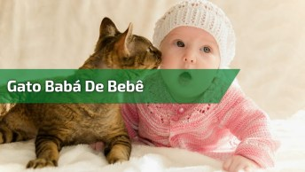 Gato Babá De Bebê - Quem Gostaria De Ter Um Babá Tão Dedicado?
